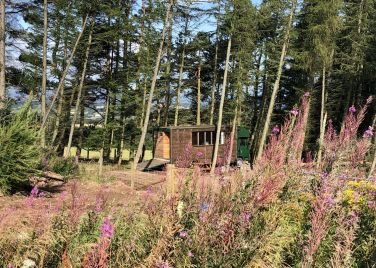 Alexander House Glamping