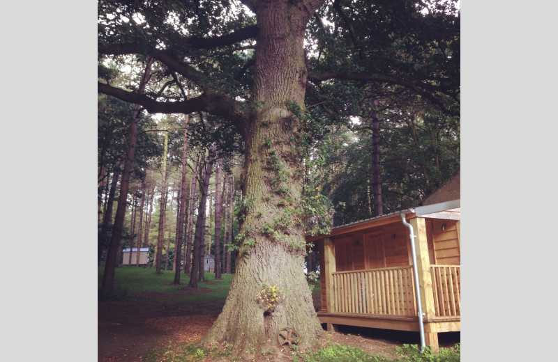 ... Happy Valley Glamping Retreat - Image 2 ...