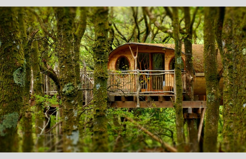 Living Room Treehouses - Image 1