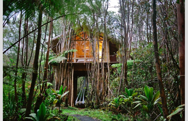 Fern Forest Treehouse - Image 1