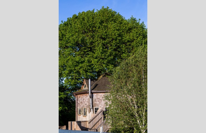 The Treehouse at Lavender Hill - Image 19