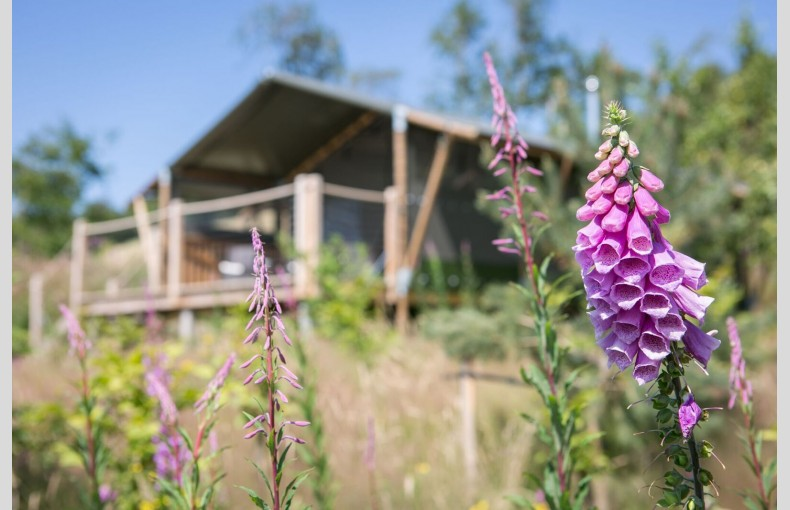 Oaklands Glamping & Treehouse - Image 22