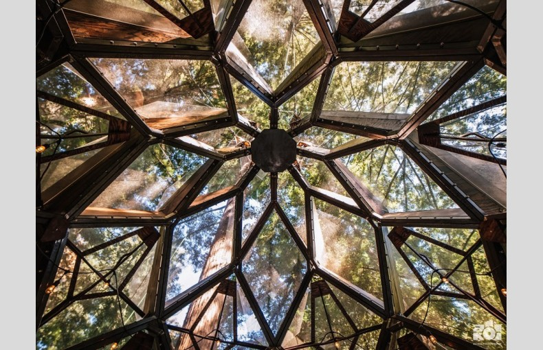 The Pinecone Treehouse - Image 5