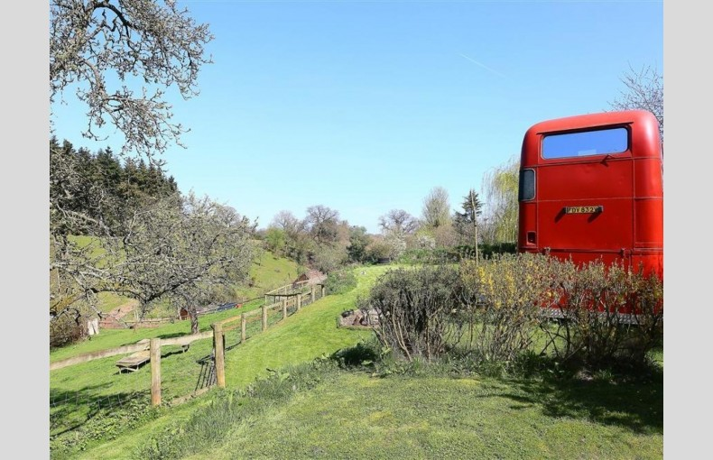 The Red Bus - Image 20