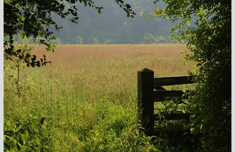 Secret Meadows - Image 8