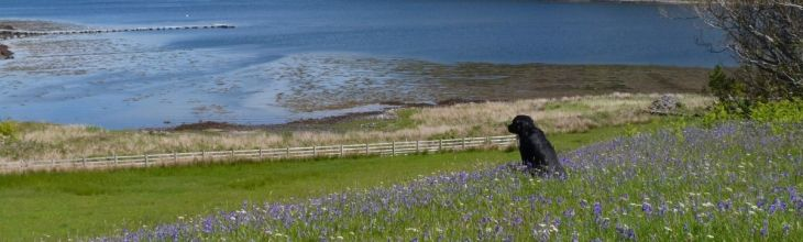 Doggy heaven: our Top Ten Paw-fect Getaways for your four legged friends