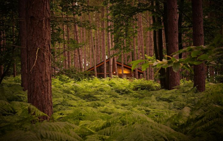 Escape to a Forest – Here's Five of the Best Reasons Why