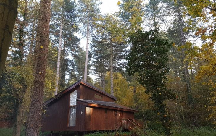 Tried and Tested: Forest Holidays Golden Oak Cabin at Thorpe Forest, Norfolk