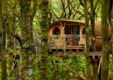Living Room Treehouses