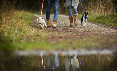 Dogs Allowed!: The Best Holidays for Two or More Pets