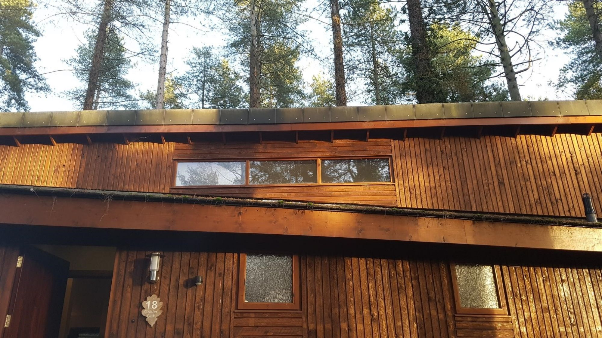 Blog-Forest-cabin-lines.jpg