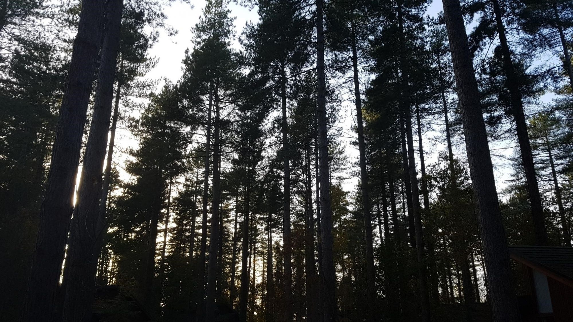 Blog-Forest-tall-trees.jpg