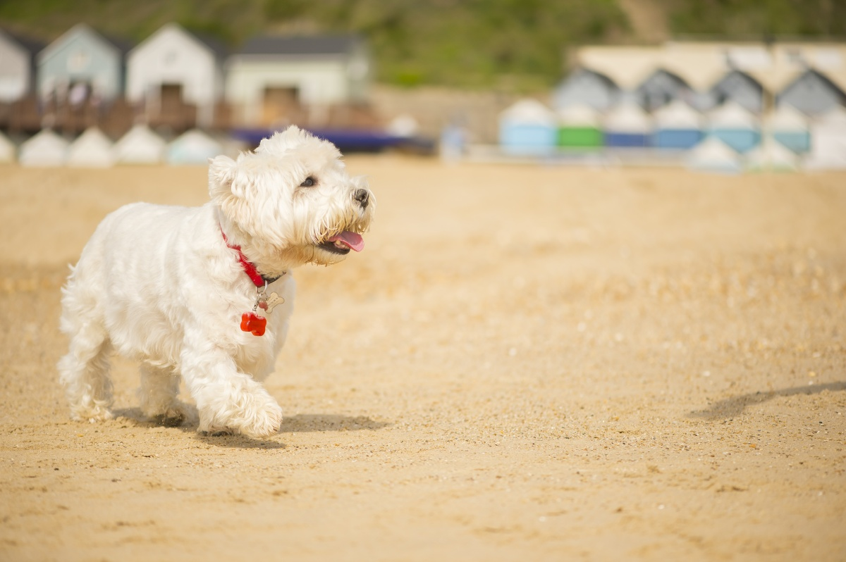 Bournemouth-Beach-Lodges-dogs-allowed.jpg